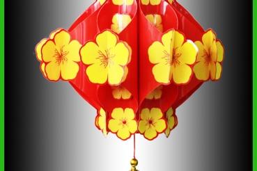 HOA MAI - VÀNG 22DLTEPTM001